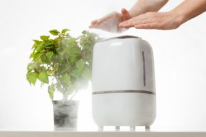 10 Best Ways to Purify the Air in Your Home